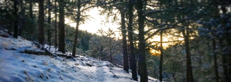 wooded path, woods, snowy trail, hiking, trail running, path, trail, winter forest, path in the forest, sunrise in the forest, winter sunrise