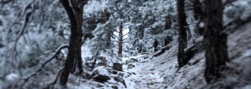 winter trail, snowy trail, winter, snowy forest, snowy trees,